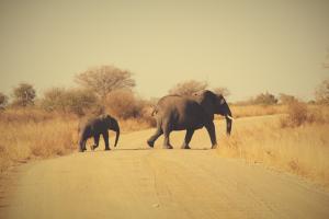 Image result for safari kruger elephant