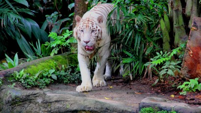 best zoos