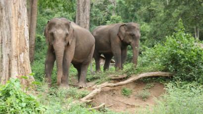 Elephant trekking in Chiang Mai