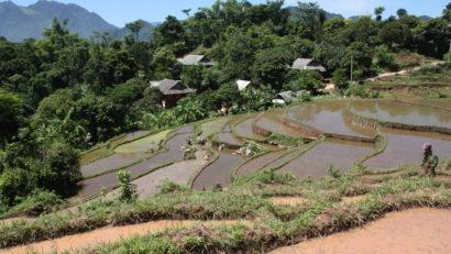 rice fields mai chau